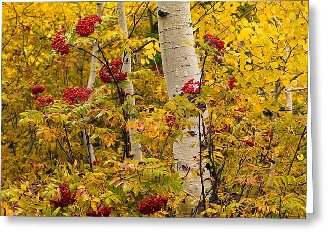 Yellow And Red Greeting Card by Leland D Howard