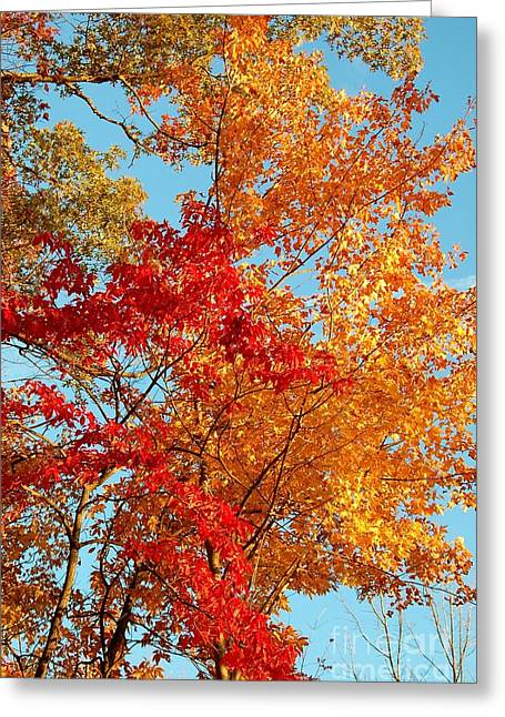 Yellow And Red Greeting Card by Patrick Shupert