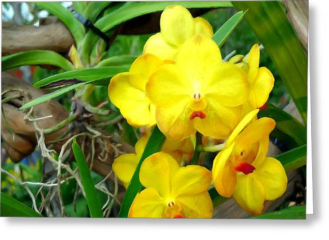 Organic Greeting Cards - Yellow Ascocentrum Flower Greeting Card by Lanjee Chee