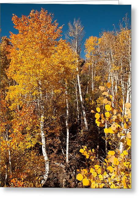 Geobob Greeting Cards - Yellow Aspen Kolob Terrace Road Utah Greeting Card by Robert Ford