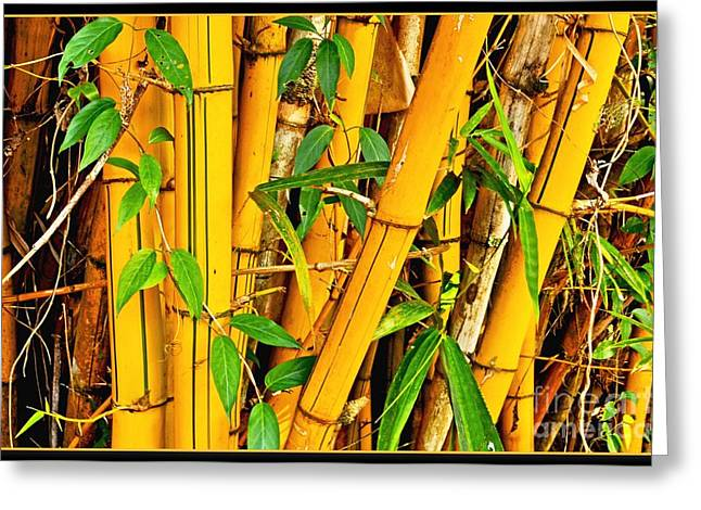 Yellow Bamboo Greeting Card by Hans R Hemken