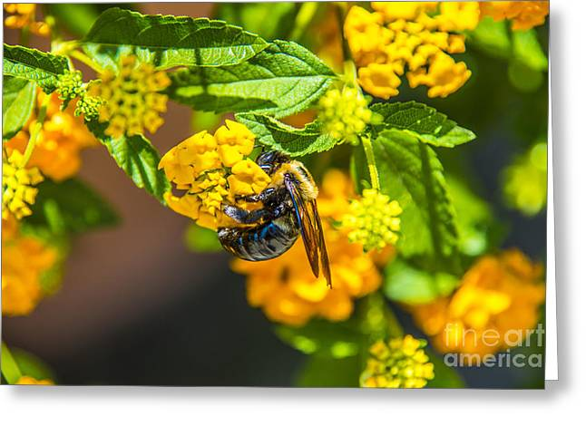 Clear Sky Images Greeting Cards - Yellow Bee Yellow Buds Greeting Card by Clear Sky Images