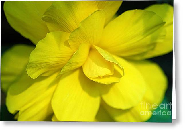 Foliage Fragrance Greeting Cards - Yellow Begonia Greeting Card by Corey Ford