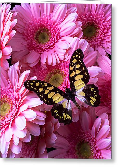 Antenna Greeting Cards - Yellow Black Butterfly Greeting Card by Garry Gay