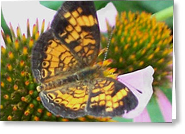 Butterflies Greeting Cards - Yellow Bling Greeting Card by Hollye Knox