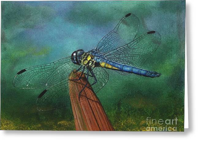 Dragonflies Pastels Greeting Cards - Yellow Blue Dragonfly Greeting Card by Christian Conner