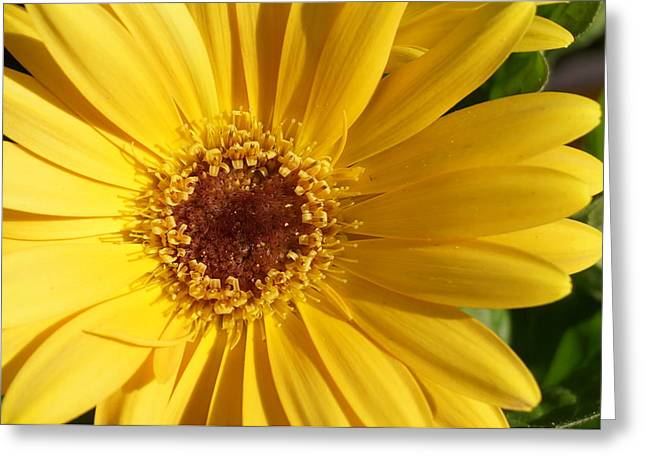 Brian Jones Greeting Cards - Yellow Burst of Flower Greeting Card by Brian Jones
