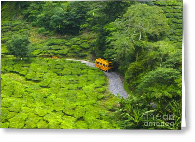 Bus Ride Greeting Cards - Yellow bus Greeting Card by Patricia Hofmeester