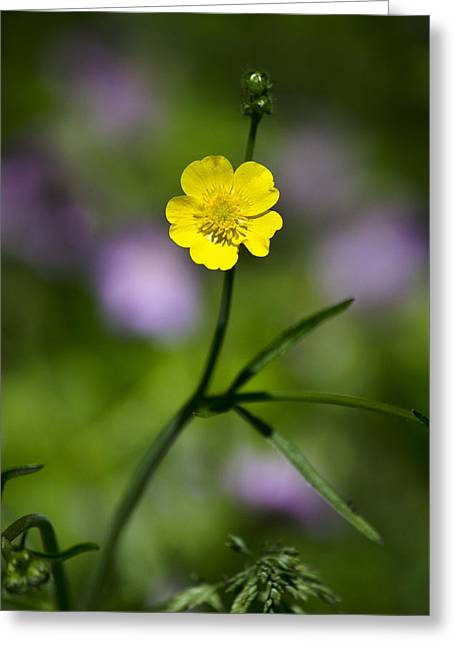 Yellow Buttercup Greeting Card by Christina Rollo