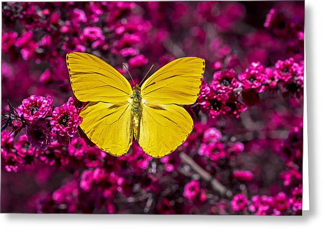 Flora Greeting Cards - Yellow butterfly Greeting Card by Garry Gay