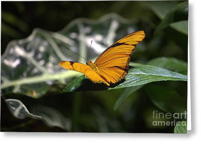 Backlit Prints Greeting Cards - Yellow Butterfly Greeting Card by Nishanth Gopinathan