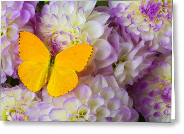 Pink Yellow Greeting Cards - Yellow butterfly on dahlias Greeting Card by Garry Gay