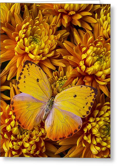 Gorgeous Flowers Greeting Cards - Yellow Butterfly On Orange Mums Greeting Card by Garry Gay