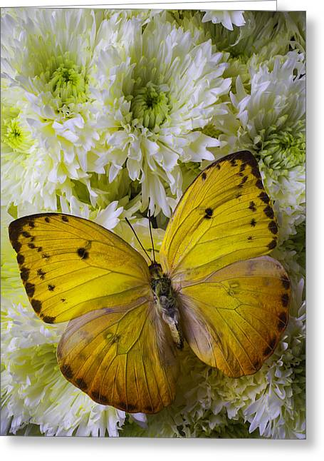 Antenna Greeting Cards - Yellow Butterfly On Pom Poms Greeting Card by Garry Gay