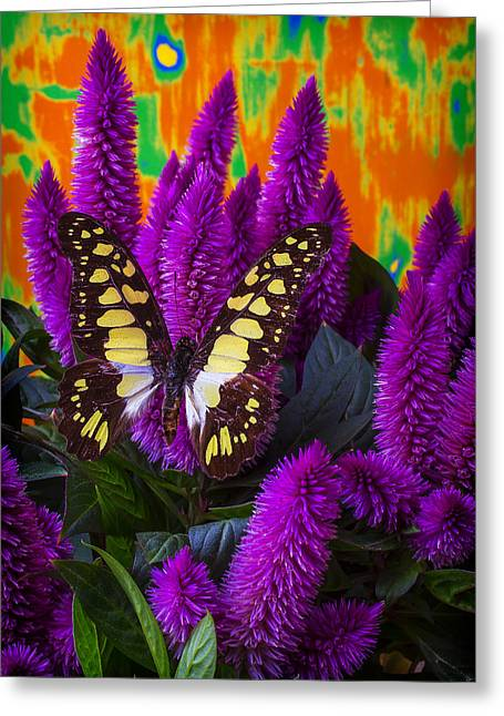 Yellow Butterfly Greeting Cards - Yellow Butterfly On Purple Celosia Greeting Card by Garry Gay