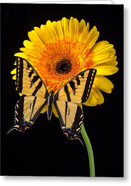 Antenna Greeting Cards - Yellow Butterfly On Yellow Mum Greeting Card by Garry Gay