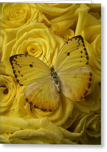 Seasonal Bloom Greeting Cards - Yellow Butterfly On Yellow Roses Greeting Card by Garry Gay