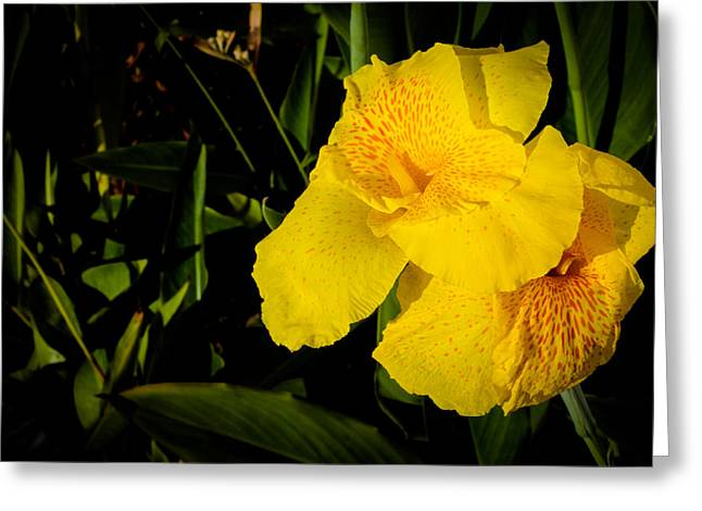 Donald Chen Greeting Cards - Yellow Canna Singapore Flower Greeting Card by Donald Chen