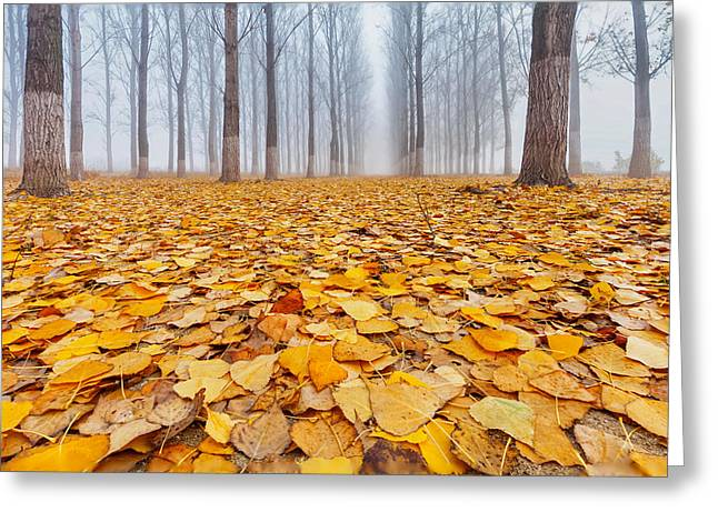 Bulgaria Greeting Cards - Yellow Carpet Greeting Card by Evgeni Dinev
