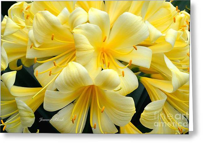 Clever Greeting Cards - Yellow Clivia Miniata Bouquet Greeting Card by Jeannie Rhode Photography