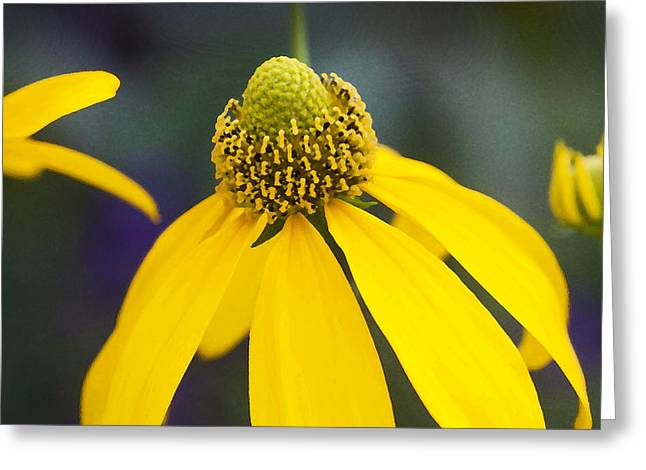 Green And Yellow Abstract Greeting Cards - Yellow Cone Flower Rudbeckia Greeting Card by Rich Franco