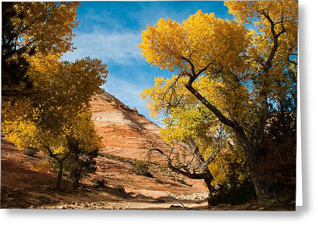 Geobob Greeting Cards - Yellow Cottonwoods and Dry Wash Zion National Park Utah Greeting Card by Robert Ford