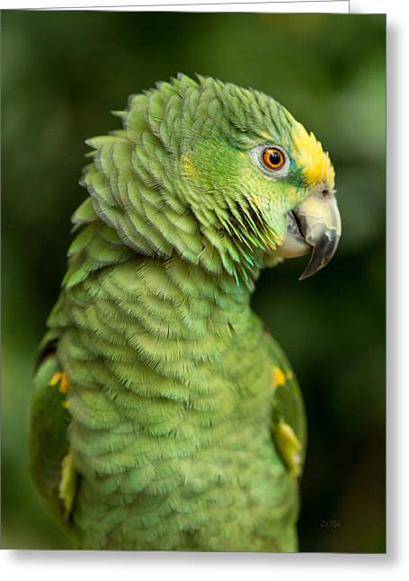 Clever Digital Greeting Cards - Yellow crowned amazon parrot Greeting Card by Eti Reid