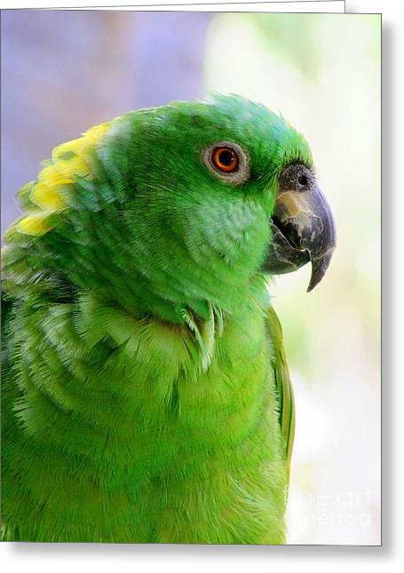 Yellow Crowned Amazon Parrot No 1 Greeting Card by Mary Deal
