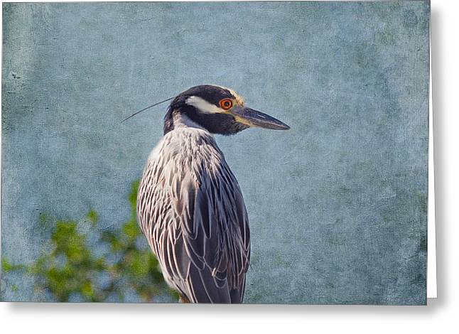 Crowned Heron Greeting Cards - Yellow Crowned Night Heron Greeting Card by Kim Hojnacki