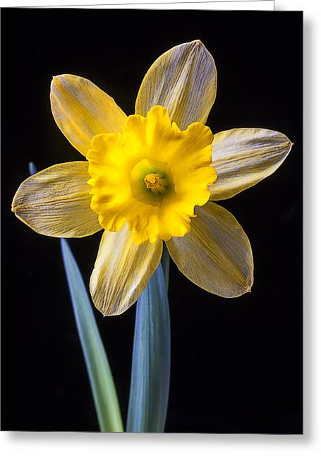 Close Up Floral Greeting Cards - Yellow Daffodil Greeting Card by Garry Gay