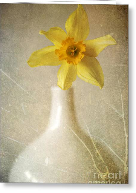 Interior Still Life Greeting Cards - Yellow daffodil in the white flower pot Greeting Card by Jaroslaw Blaminsky