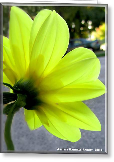 Yellow Dahlia Bloom Greeting Card by Danielle  Parent