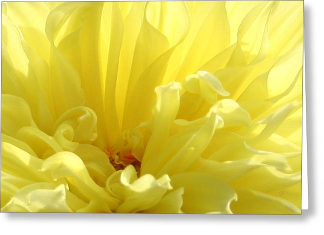 Recently Sold -  - Floral Digital Art Greeting Cards - Yellow Dahlia Burst Greeting Card by Ben and Raisa Gertsberg