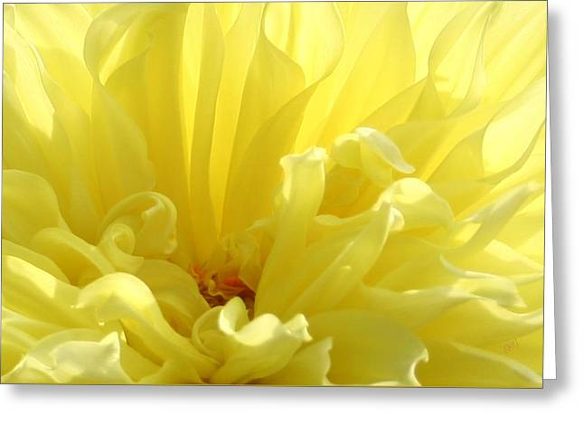 Flower Center Greeting Cards - Yellow Dahlia Burst Greeting Card by Ben and Raisa Gertsberg
