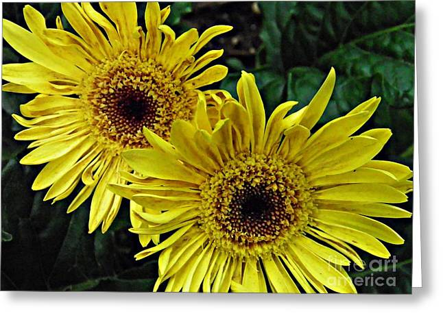 Sarah Loft Photographs Greeting Cards - Yellow Daisies Greeting Card by Sarah Loft