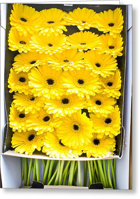 Selection Greeting Cards - Yellow daisies Greeting Card by Tom Gowanlock