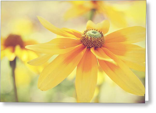 Abstracted Coneflowers Greeting Cards - Yellow Daisy Burst Greeting Card by Amelia Matarazzo