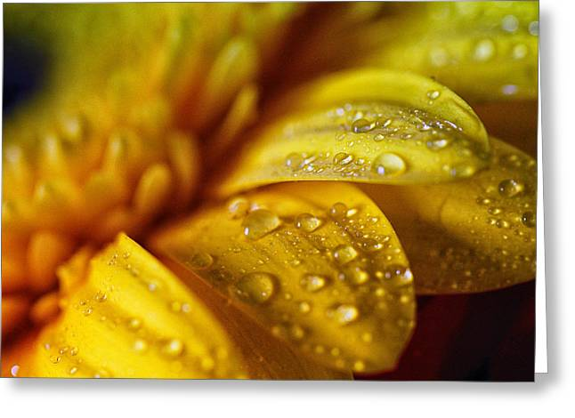 Yellow Daisy Drizzle Greeting Card by Christy Patino