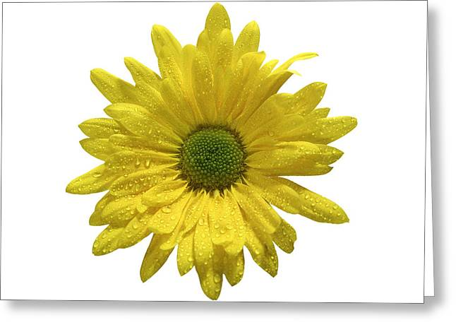 Yellow Daisy  Greeting Card by Mauro Celotti