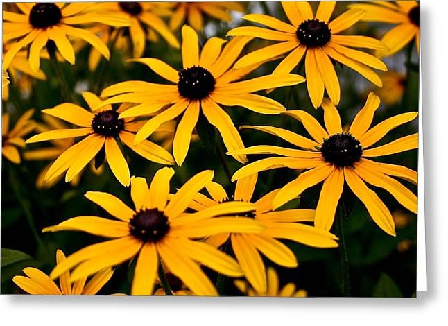 Indiana Springs Digital Art Greeting Cards - Yellow Daisys     Greeting Card by Lynne Dohner
