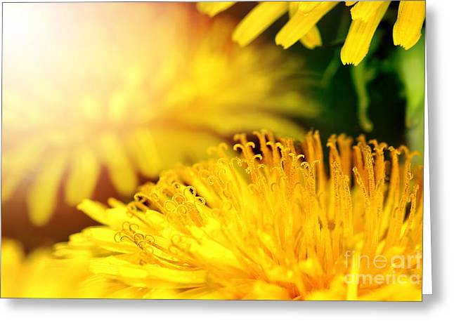 Close Focus Floral Greeting Cards - Yellow dandelion background Greeting Card by Gregory DUBUS