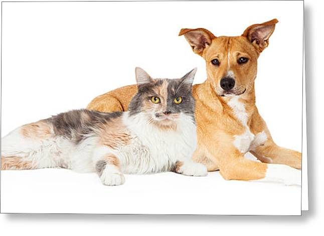 Mutt Greeting Cards - Yellow Dog and Calico Cat Greeting Card by Susan  Schmitz
