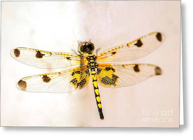 Dragon Greeting Cards - Yellow Dragonfly Pantala flavescens Greeting Card by Iris Richardson