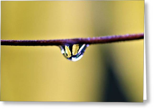 Rain Drop Greeting Cards - Yellow Drops Of Rain Greeting Card by Dan Sproul