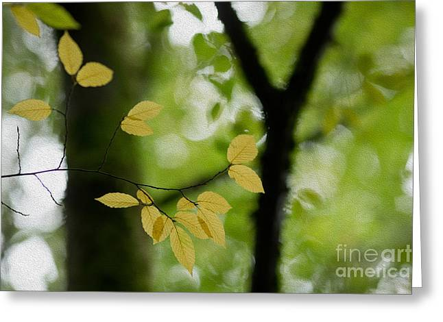 Yellow Leaves Greeting Cards - Yellow Fall Leaves Greeting Card by Rebecca Cozart
