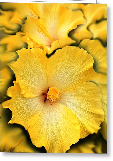 Mallow Greeting Cards - Yellow Fantasy Hibiscus Flowers Greeting Card by Jennie Marie Schell