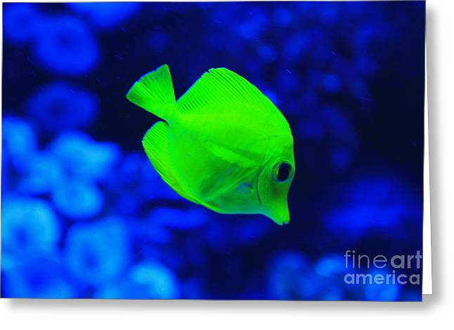 Yellow Fish Greeting Card by Emrah Selamet