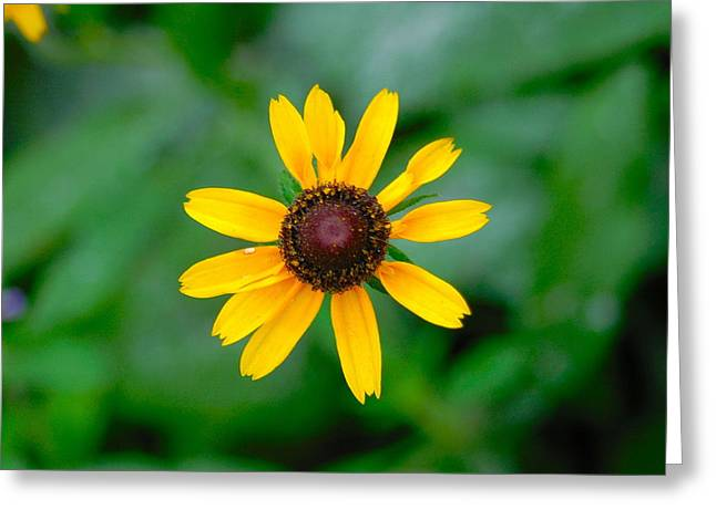 Belle Isle Greeting Cards - Yellow Flower 2 Greeting Card by Gary Marx