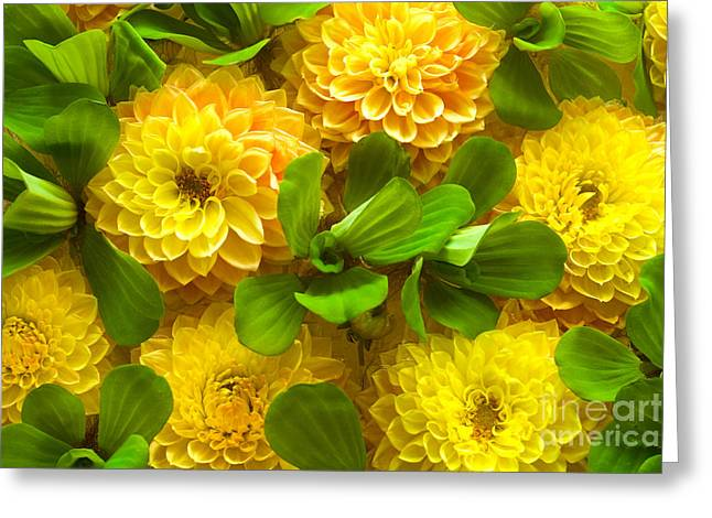 Foam Pyrography Greeting Cards - Yellow flower beautiful Greeting Card by Boon Mee