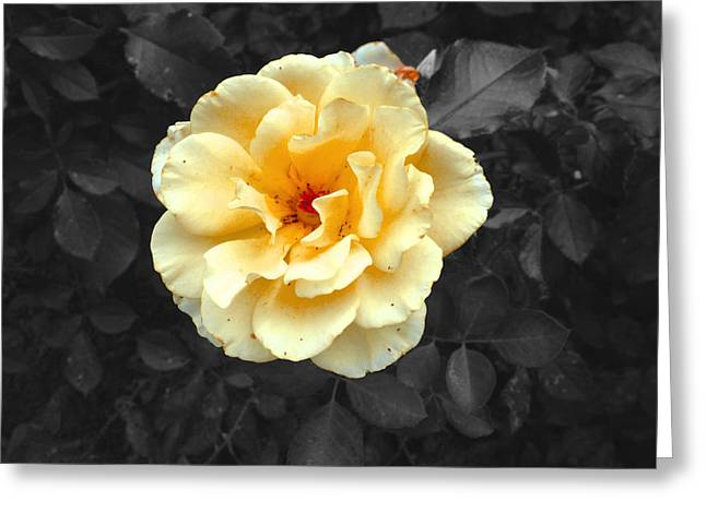 Bush Greeting Cards - Yellow Flower Greeting Card by Felix Concepcion